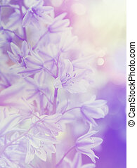 Reto bluebells - Bluebell flowers with vintage effect