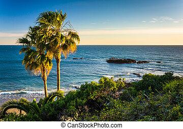 retraso, océano pacífico, parque, árboles de palma, vista, ...