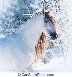 retrato, andalusian, cavalo, inverno