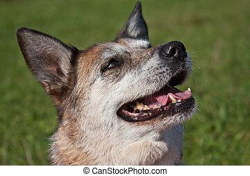 retrato, cão