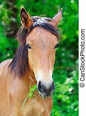 retrato, caballo