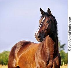 retrato, caballo, bahía
