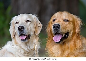 retrato, cachorros, jovem, beleza, dois