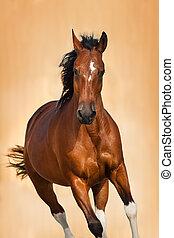retrato, cavalo, baía