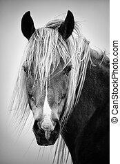 retrato, cavalo, bw