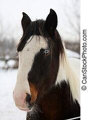 retrato, cavalo, cigana