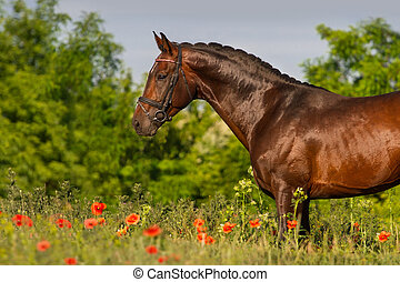 retrato, cavalo, flores