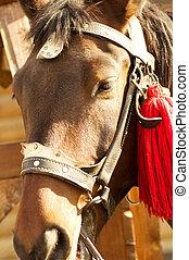 retrato, cavalo, vermelho