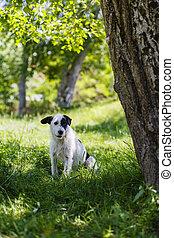 retrato, con, un, perro, sentado, en, el, pasto o césped