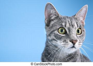 retrato, cute, cat., cinzento