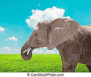 retrato, de, enorme, elefante africano, em, natureza