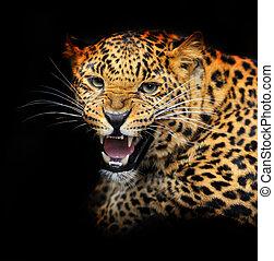 retrato, de, leopardo, em, seu, natural, habitat