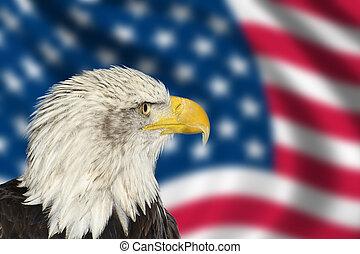 retrato, de, norteamericano, bal, águila, contra, bandera de...