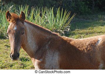 retrato, de, sorrindo, cavalo