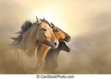 retrato, de, três, mustang, cavalos, em, pôr do sol