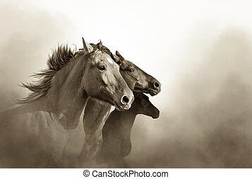 retrato, de, três, mustang, cavalos, em, pôr do sol, bw