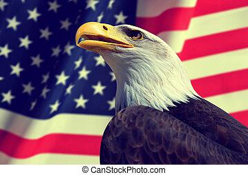 retrato, de, un, calvo, eagle.