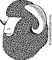 retrato, de, un, merino, sheep.