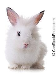 retrato, de, un, poco, conejo