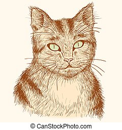 retrato, dibujado, atigrado, cat., mano