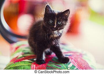 retrato, em, natureza, com, bonito, gatos