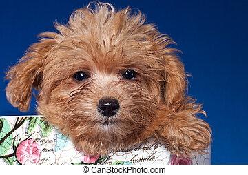 retrato, filhote cachorro
