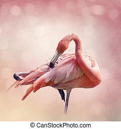 retrato, flamenco, rosa