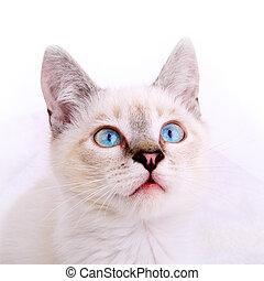 retrato, gatinho