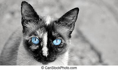 retrato, gato