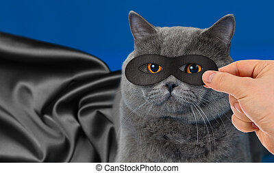 retrato, herói, super, gato