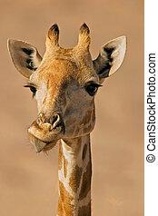 retrato, jirafa