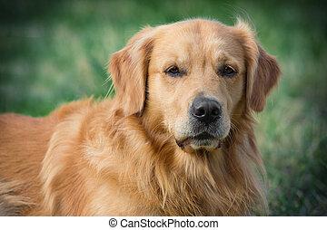 retrato, jovem, beleza, cão