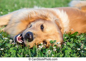 retrato, joven, belleza, perro