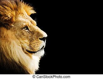 retrato, león