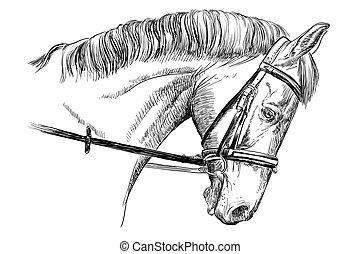 retrato, rédea, cavalo