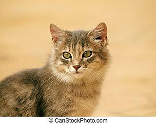 Retrato, raça, gato