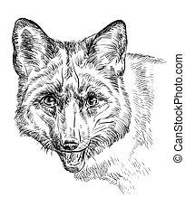 retrato, raposa, vetorial