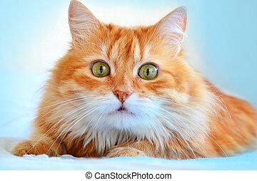retrato, rojo, gato
