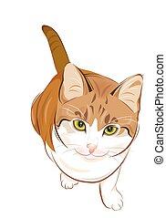 retrato, simpático, gato jengibre