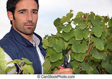 retrato, wine-grower