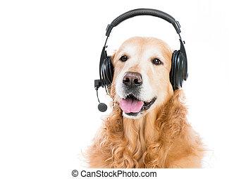retriever, à, casque à écouteurs