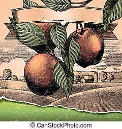 Retro apple orchard, engraving countryside scenery for...