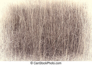 retro background of dry tall grass