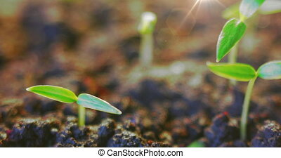 retro background, spring new life, Agriculture old fashioned film, summer sunburst, sun burning small green growing plants, global warming, Germinating Seed timelapse