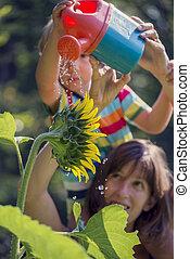 retro, beeld, van, jonge, moeder, vasthouden, haar, toddler, op, schouders, als, hij, wateren, een, mooi, bloeien, zonnebloem