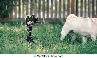 Retro camera. A dog with horns on his head poses for a retro movie camera.