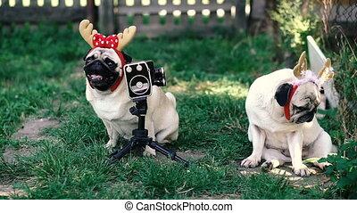Retro camera. Dogs with horns on their heads posing for a retro movie camera.