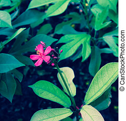 retro designa, purpurfärgade blommor