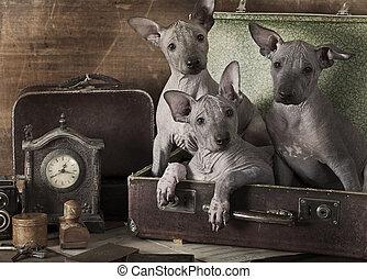 retro, disegnato, cuccioli, ritratto