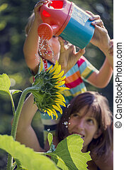 Retro image of young mother holding her toddler on shoulders as he waters a beautiful blooming sunflower